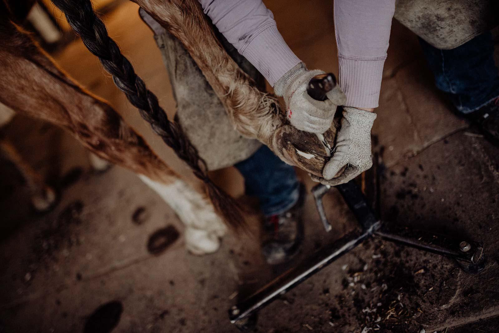 Detailaufnahme bei der Barhufbearbeitung