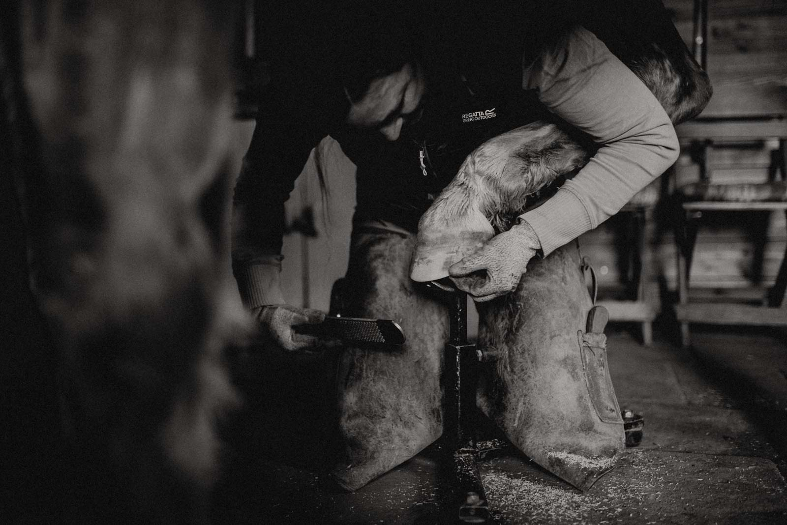 Barhufbearbeitung durch Huforthopädin der DIFHO